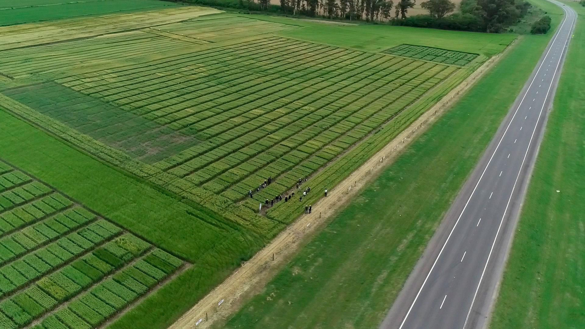 Jornada de campo 2020, Nuevos cultivares de cebada